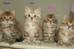 P5095684-Inoa-Babys-names